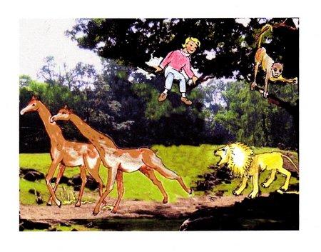 1 Giraffen und Löwe