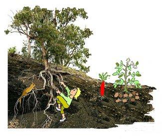 Wurzeln mit Baum