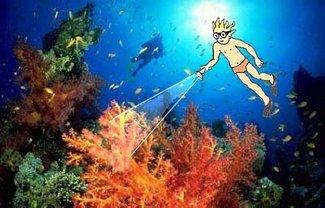 4 Korallenriff