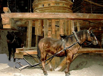Göpelmühle Pferd