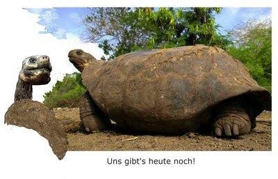 21 Riesenschildkröte