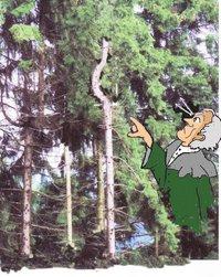 Buhn krummer Baum