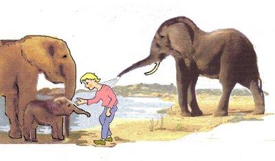 13 Elefanten