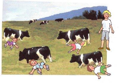 23 Kühe