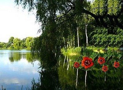 Witipp Moor mit Blumen