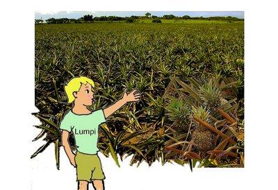 34 Ananasplantagemit Lumpi