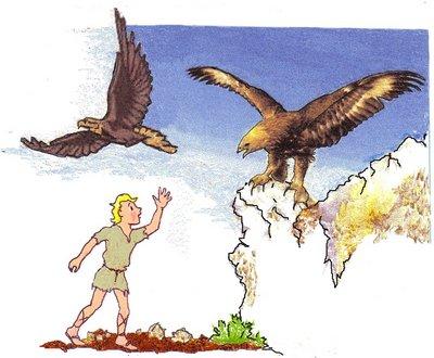 8 Adler