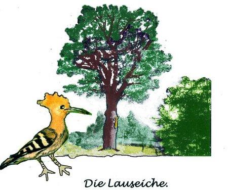 Lauseiche Vogel NEUER bAUM