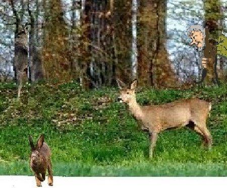 Troll Wald Reh KaninTroll