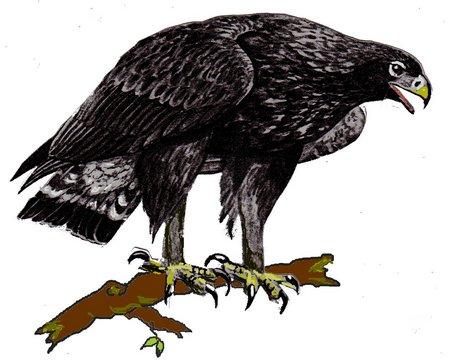 Firlefänzchen Adler