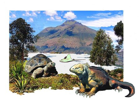 Flämmchen Galapalösinsel