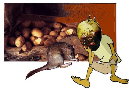Örpel Ratte Orpel 2