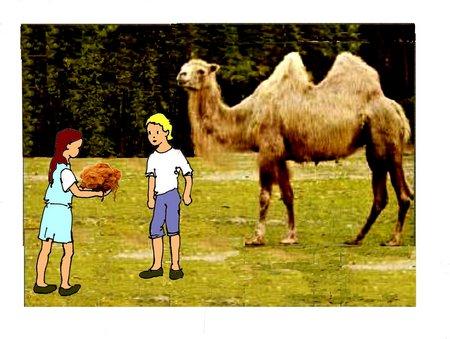 29 Stoff Kamel